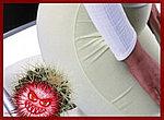 Крем-воск от геморроя ЗДОРОВ на натуральных продуктах пчеловодства, фото 3