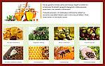 ЗДОРОВ от грибка ногтей и ног, устраняет потливость ног, на основе натуральных продуктов пчеловодства, фото 4