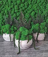 Горшочки со стабилизированным мхом и растениями