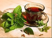 Иван-чай с мятой, фото 1