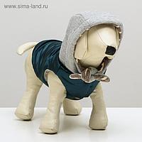 Куртка зимняя, XS (ОШ 18-22,ОГ 27-32,ДС 20 см), синия