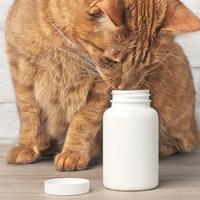 Витамины для животных в кормов...