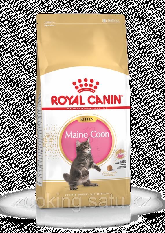 Royal Canin Kitten Maine Coon 36,корм для котят породы Мейн Кун, уп. 2кг. - фото 2