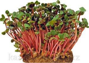 Семена микрозелени и наборы для выращивания