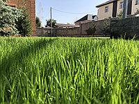 Посев газона (гарантия всхода)