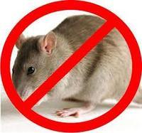 Полное уничтожение крыс