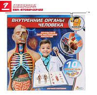 Набор «Маленький учёный. Внутренние органы человека»