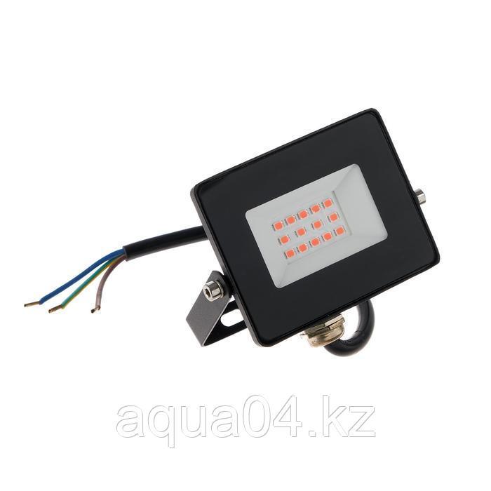 Прожектор светодиодный Smartbuy FL SMD LIGHT, Фитодиоды (10 Вт, IP65)
