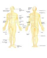 Обучение точечному массажу 2 уровень