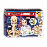 """Набор для опытов """"Школа ученого"""" Скелет Человека"""