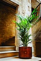 Кашпо с автополивом для растений из натуральной древесины , Серия Cosmo производитель HobbyFlower Spain