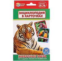 """Карточки развивающие """"Животные мира"""""""