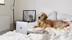 Как устранить запах животных в квартире?