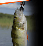 Активатор зимнего и летнего клева FishHungry (Фиш Хангри)  голодная рыба, фото 4