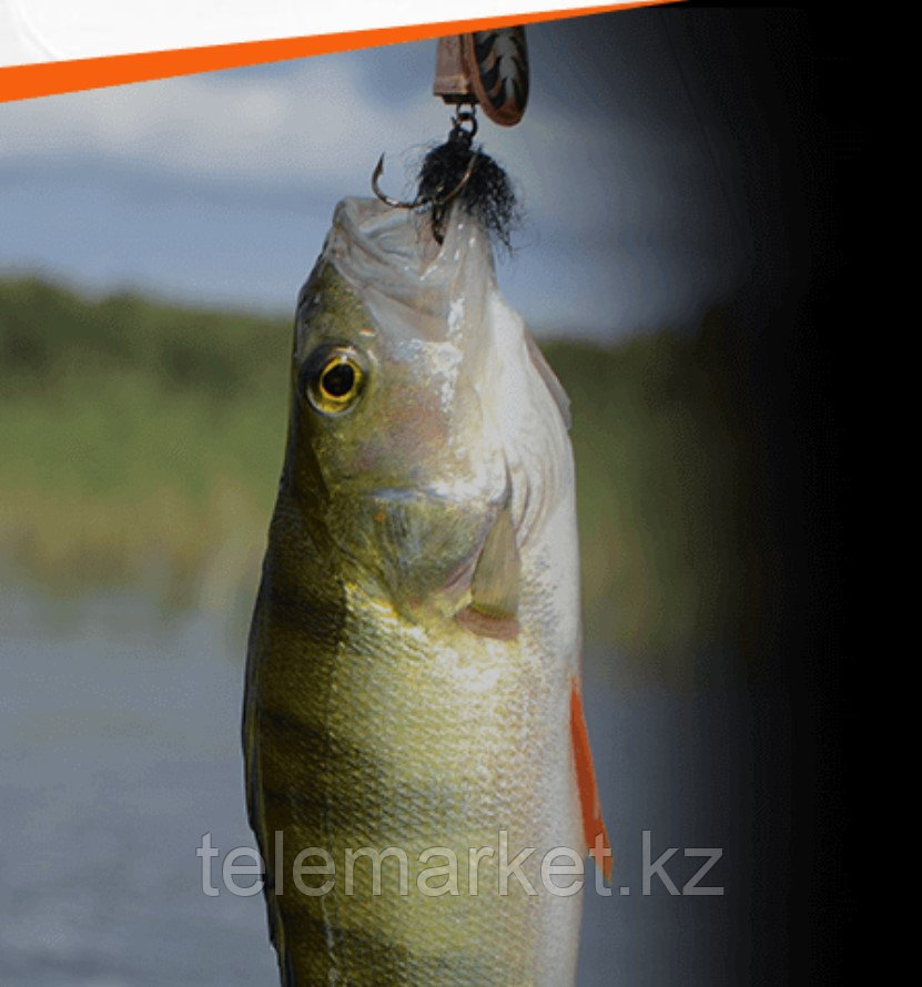 Активатор клева Fish Hungry (фиш хангри) для всех видов рыб - фото 1