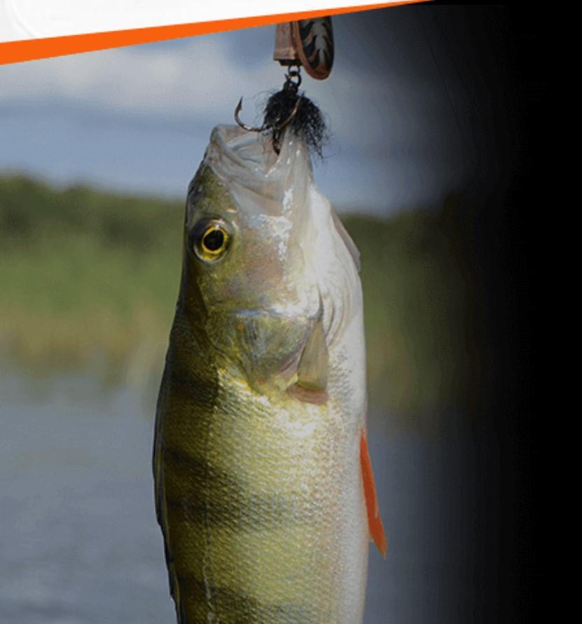 Активатор клева FishHungry сильная приманка для всех видов рыб - фото 2