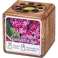 Набор для выращивания с органайзером «Экокуб Burn», сирень, фото 1