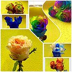 Поступление свежесрезанных цветов!!!