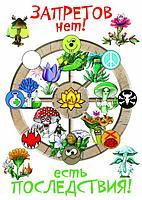 Эволюция. Трава и грибы, фото 5