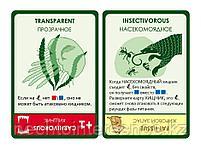 Эволюция. Трава и грибы, фото 9