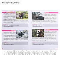 МЕМО Мир животных (50 карточек), фото 4
