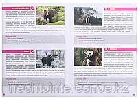 МЕМО Мир животных (50 карточек), фото 7