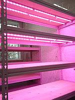 Линейная фитолампа полного спектра 60 см для растений