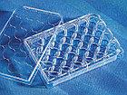 Планшет стерильный, 24-луночный Corning, 3524, фото 2