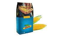 Семена гибрида кукурузы ДКС 3151 Монсанта