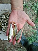 Живая рыба для водоемов