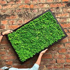 Что такое стабилизированный мох и для чего он нужен?