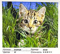"Картина по номерам "" Котик "" 50*40см"