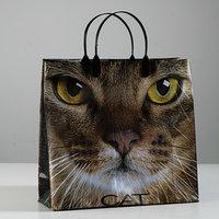 Пакет 'Кэт', мягкий пластик, 30 х 30 см, 150 мкм (комплект из 10 шт.)