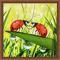Картина стразами на холсте «Пара божьих коровок», 25*25см