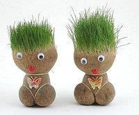 Кукла газон - Растения для дома