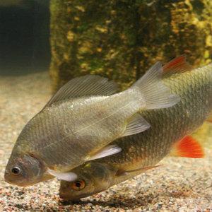 рыбоводство, общее