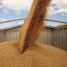 Услуги по помолу, сортировке и фасовке сельскохозяйственной продукции