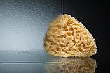Душевая дверь в нишу Vegas Glass ZP 160 07 02 профиль матовый хром, стекло шиншилла, фото 3