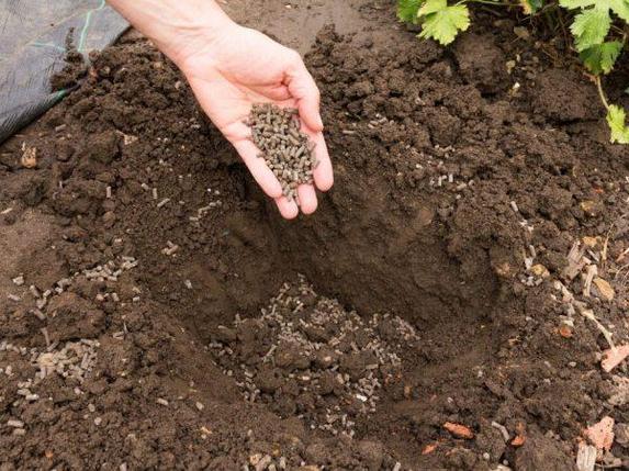 Куриный помет гранулированный для подкормки растений 3,3л, фото 2