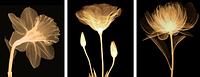 Алмазная вышивка «Золотой цветок», Love you wei