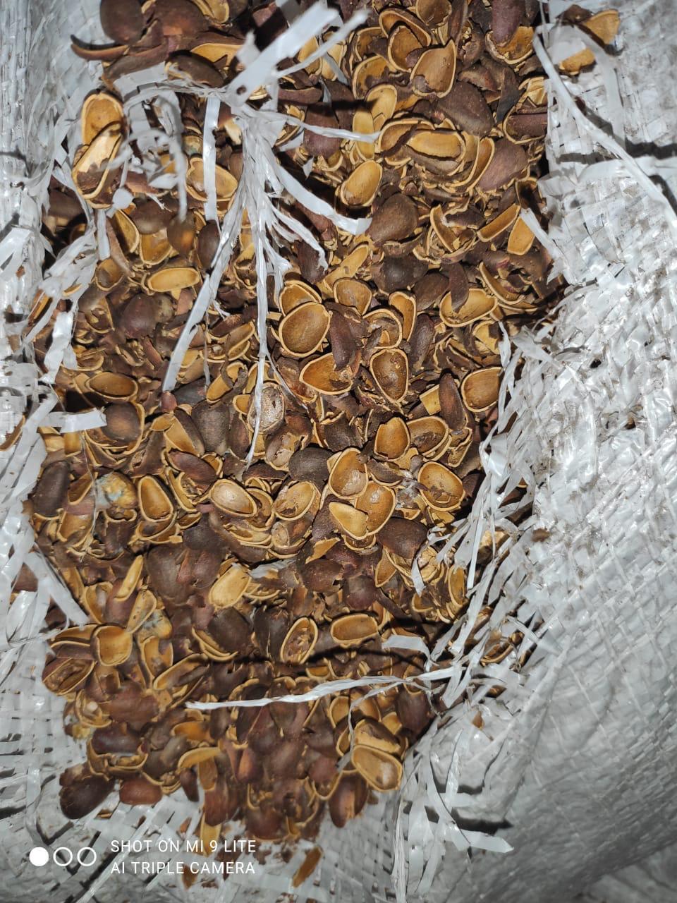 Скорлупа кедрового орех (мульча кедрового ореха)