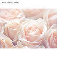 """Фотообои B-014 Bellissimo """"Нежные розы"""", 4 листа 1400х2000 мм"""