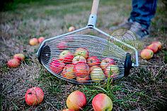 Ролл-плодосборник для сбора яблок. Бесплатная доставка!