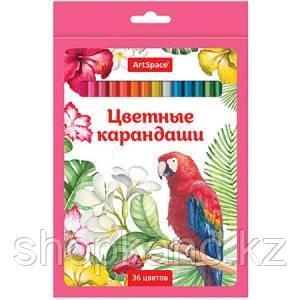 Карандаши Птицы, 36 цветов, заточенные.