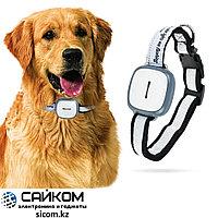 GPS Трекер для Собак GT011, Онлайн отслеживание, Водонепроницаемость IP67