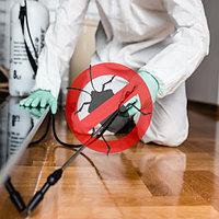 Уничтожение насекомых и обработка от насекомых