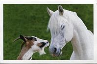 Для Коз и Лошадей