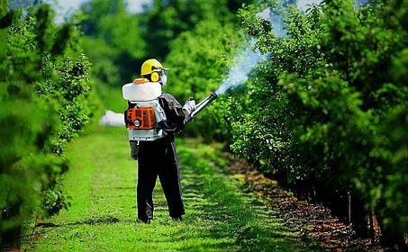 Основные способы борьбы с вредителями на земельном участке