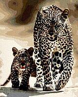 """Картина по номерам """"Леопарды"""" 50*40"""