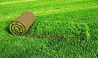 Посев газонной травы, укладка рулонного газона